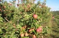 Sărbătoarea mărului la Naturalma