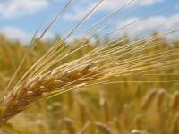 Stimulatorii de înrădăcinare, terapia de refacere a culturilor după iarnă